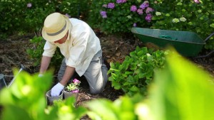 gardening, father's day, chores