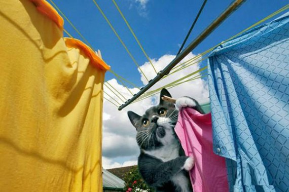 cat chores, laundry day