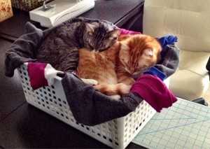 cute cats, cats snoozing, laundry day