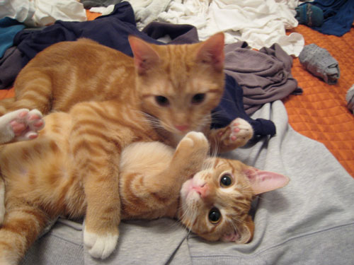 laundry day, ginger cats