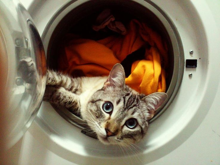 washing machine cat, laundry day