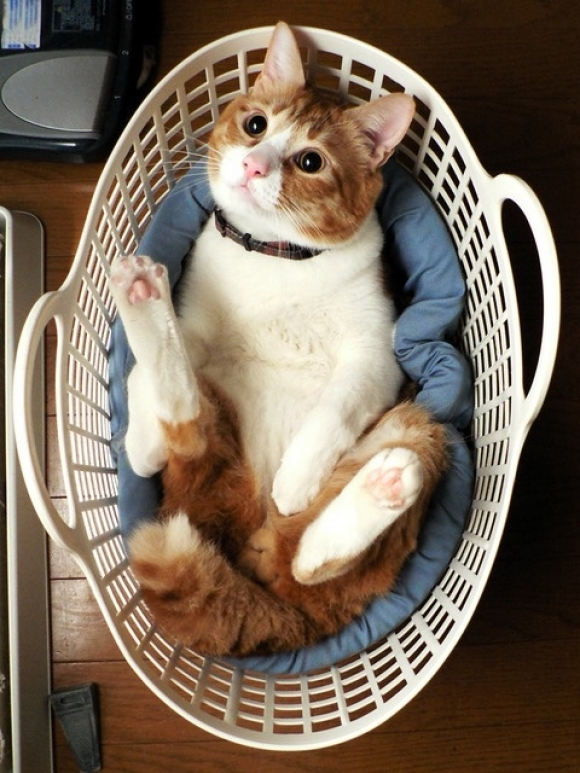 cute cat, laundry basket