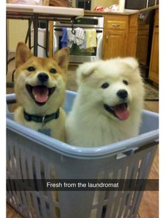 dogs in a basket, laundry basket