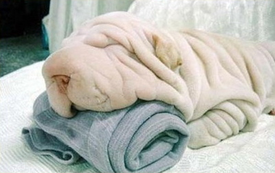 towel, dog